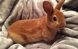 Сколько стоит декоративный кролик?