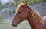Сколько стоит живая лошадь?